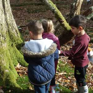 Extra Curricular Forest School